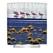 Flamingos At Torres Del Paine Shower Curtain