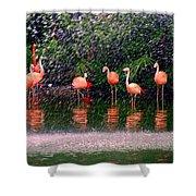 Flamingos II Shower Curtain