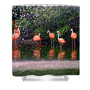 Flamingos II Shower Curtain
