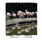 Flamingos With Reflection Shower Curtain