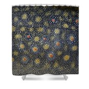 Flank Of A Brook Trout Salvelinus Shower Curtain