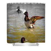 Flapping Lesser Scaup Shower Curtain