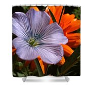 Flax And Aster Shower Curtain