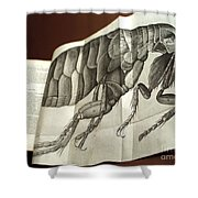 Flea From Robert Hookes Micrographia Shower Curtain