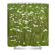 Fleabane In The Meadow Shower Curtain