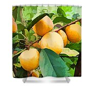 Fleshy Yellow Plums On The Branch Shower Curtain