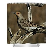 Flicker On Cedar Shower Curtain