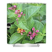 Flight Of The Bumble Bee Shower Curtain