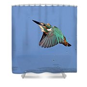 Flight Of The Kingfisher Shower Curtain