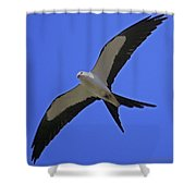 Flight Of The Kite Shower Curtain
