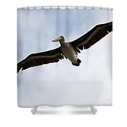 Flight Of The Pelican Shower Curtain