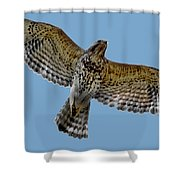 Flight Of The Red Shouldered Hawk Shower Curtain