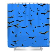 Flight Of The Vultures Shower Curtain