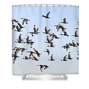 Flight Of The White Ibis Shower Curtain
