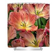 Flighty Tulips Shower Curtain