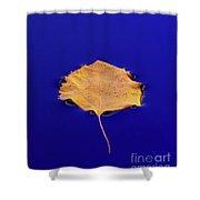 Floating Leaf 3 - Birch Shower Curtain