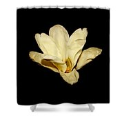 Floating Magnolia Flower Shower Curtain