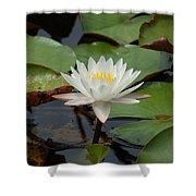 Floating Water Lilly Shower Curtain