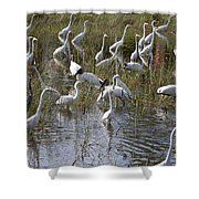 Flock Of Different Types Of Wading Birds Shower Curtain