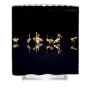 Flock Of Pelicans At Night Shower Curtain