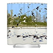 Flock Of Seagulls Shower Curtain