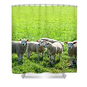 Flock Of Sheep Standing In A Field Waiting Shower Curtain