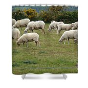 Flock Of Sheeps Shower Curtain