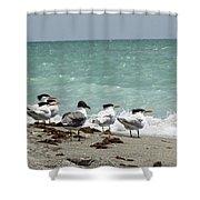 Flock Of Terns Gp Shower Curtain