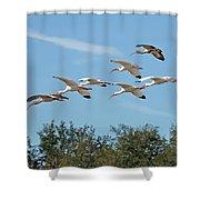 Flock Of White Ibises Shower Curtain