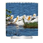 Flock Of White Pelicans Shower Curtain