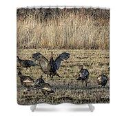 Flock Of Wild Turkeys Shower Curtain