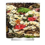 Floor Of The Forest In Fall Shower Curtain