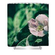 Flora 2821 Shower Curtain