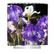 Flora Bota Irises Purple White Iris Flowers 29 Iris Art Prints Baslee Troutman Shower Curtain