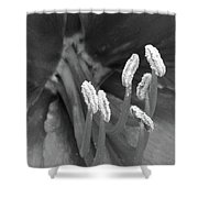 Flora Stigma Bw Shower Curtain