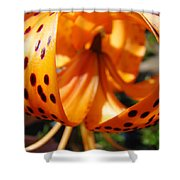 Floral Abstracts Art Prints Summer Tiger Lily Baslee Troutman  Shower Curtain
