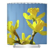 Floral Art Daffodil Flowers Spring Prints Blue Sky Baslee Troutman Shower Curtain