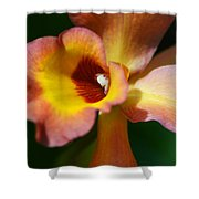 Floral Art - Intimate Orchid 3 - Sharon Cummings Shower Curtain