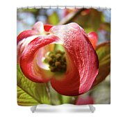 Floral Art Pink Dogwood Flowers Baslee Troutman Shower Curtain