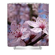 Floral Art Pink Spring Blossoms Prints Blue Sky Baslee Troutman Shower Curtain