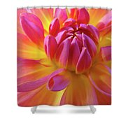 Floral Art Prints Dahlia Flower Giclee Artwork Baslee Troutman Shower Curtain