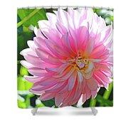 Floral Art Prints Pink Dahlias Sunlit Baslee Troutman Shower Curtain