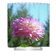 Floral Art Prints Pink White Dahlia Flower Pastel Baslee Troutman Shower Curtain
