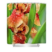 Floral Bearded Iris With Rain Drops  Shower Curtain