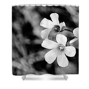 Floral Black And White Shower Curtain