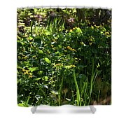 Floral Border Shower Curtain
