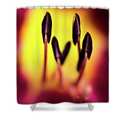 Floral Candle Shower Curtain
