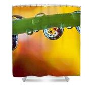 Floral Drop Trio  8054 Shower Curtain