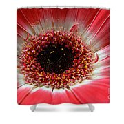 Floral Eye Shower Curtain