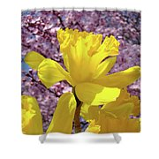 Floral Fine Art Daffodils Art Prints Spring Flowers Sunlit Baslee Troutman Shower Curtain